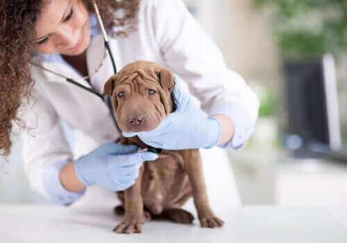 hund ved dyrlæge
