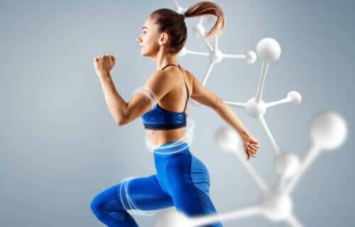 Hvad er energimetabolismen?