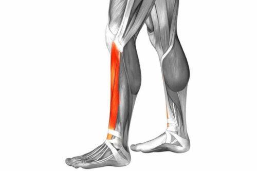 fremhævning af betændelse i ben