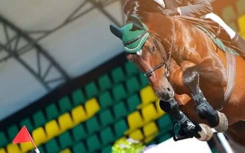 Hest under en konkurrence