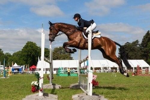 Seks fantastiske hestesportsgrene, du skal kende til