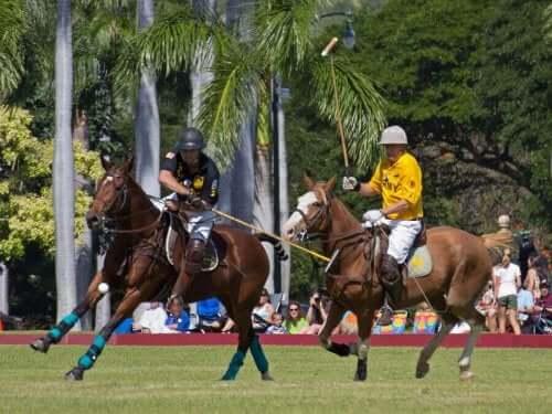 Polo er en holdsport på hesteryg