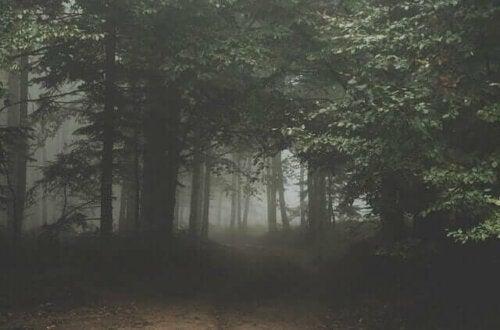 diset skov