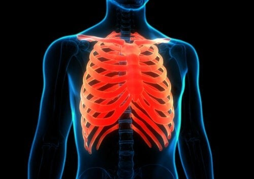 Illustration af ribbenene i menneskekroppen