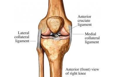 animation af knæ