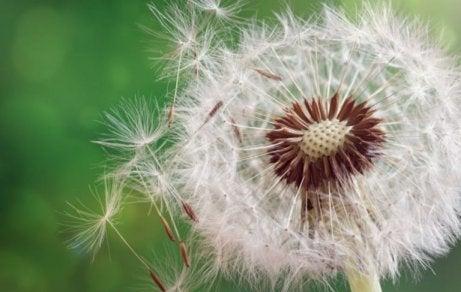 Allergien durch Pollen