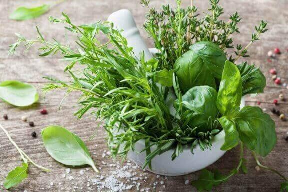 Die gesundheitlichen Vorteile von Estragon