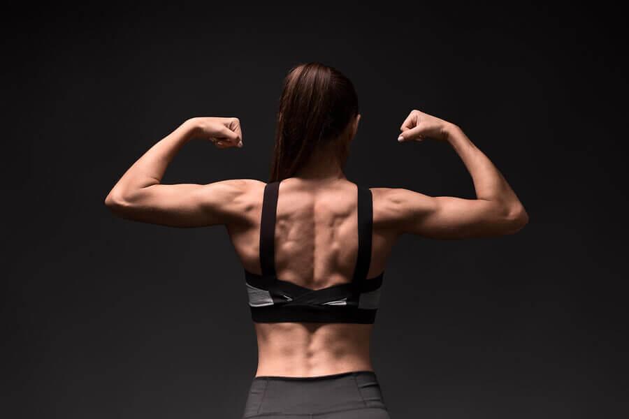 Anatomie des muscles rhomboïdes et exercices pour les renforcer et les étirer