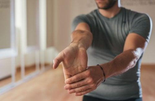I muscoli degli avambracci