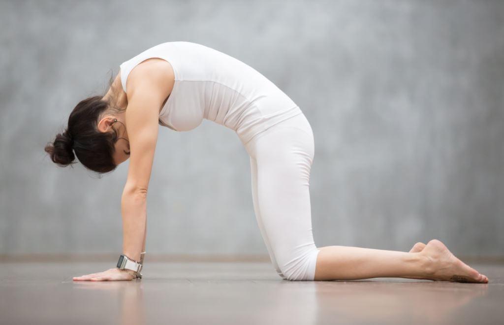 Posizione del gatto nello yoga