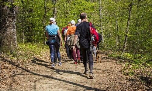 Gruppo di escursionisti camminano tra gli alberi