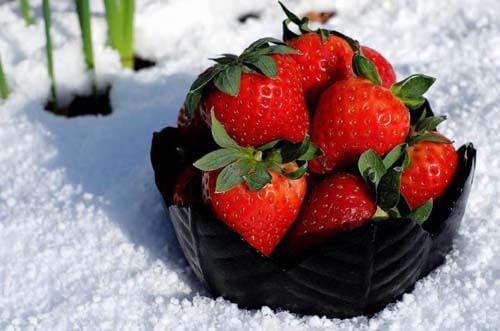 Fragole in una coppa sulla neve