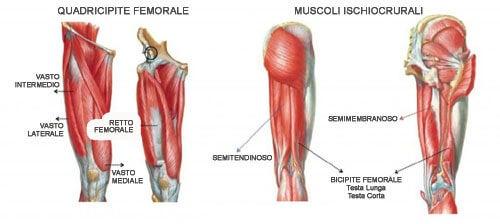 Schema dei muscoli quadricipiti
