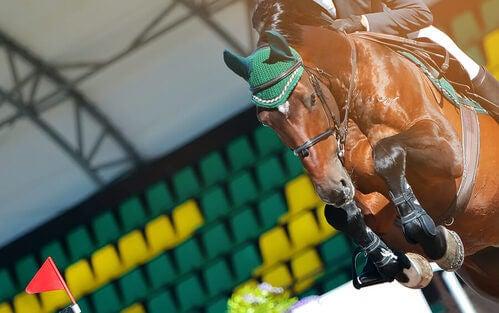 Cavallo durante una gara di salto ostacoli