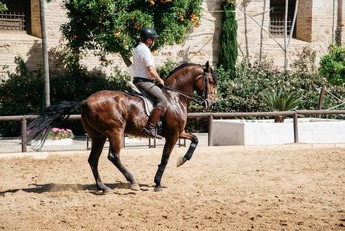 Fantino a cavallo fa dressage