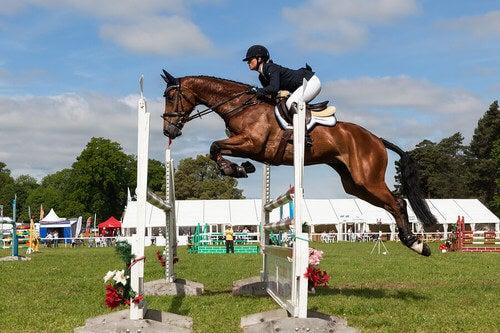 6 sport equestri che vale la pena conoscere