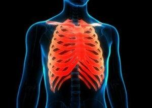 Anatomia delle costole nel corpo umano.
