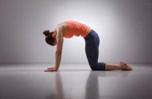Posizione del gatto yoga.
