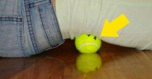 テニスボールを使ったエクササイズ