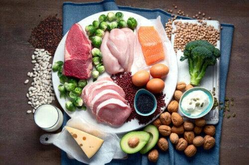 단백질 다량 섭취와 건강의 관계