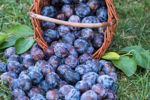 Plommer har mange egenskaper og fordeler for kostholdet ditt