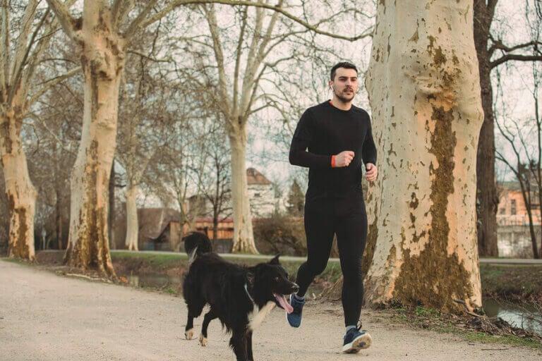 5 tips for å jogge med hunden din