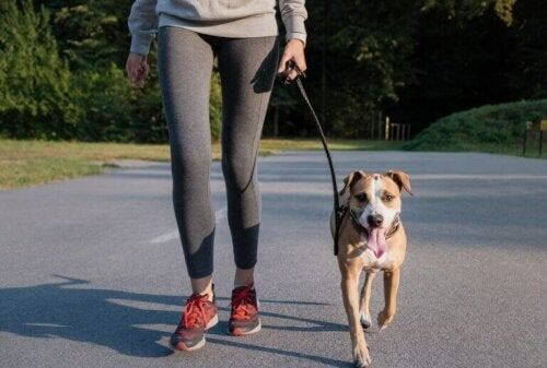 kvinne jogger med hunden sin
