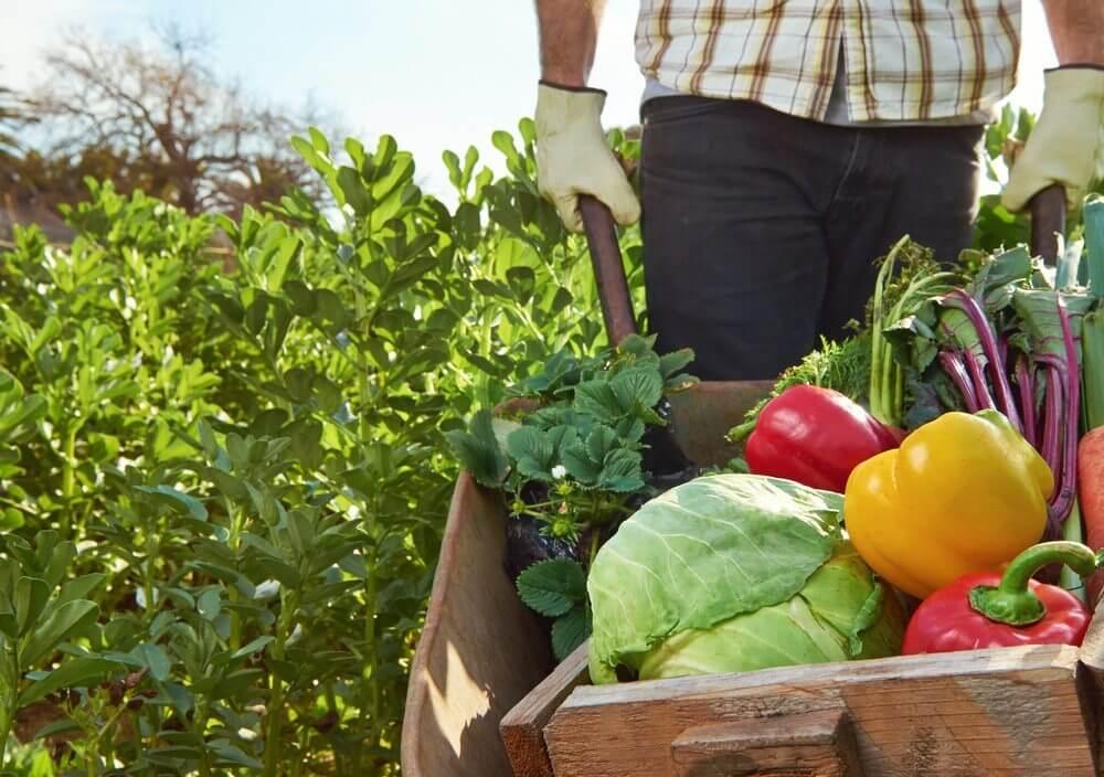 Et lavkarbo kosthold kan hjelpe både din og planetens helse.