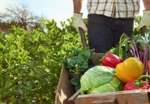 Mann dyrker økologisk mat