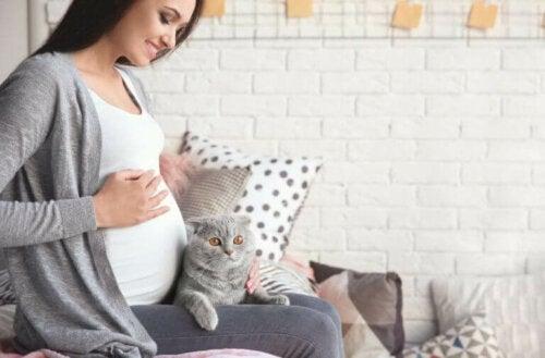 Toksoplasmose i løpet av graviditeten: slik påvirkes du