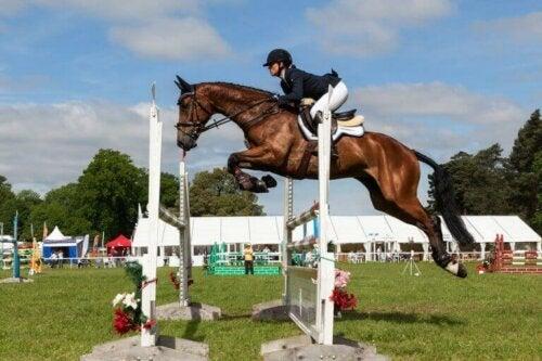 Seks fantastiske grener innen hestesport