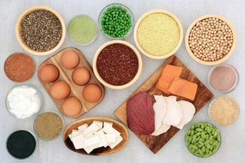Kilder til plante- og animalsk protein.