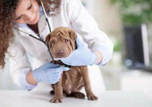 Raadpleeg de dierenarts