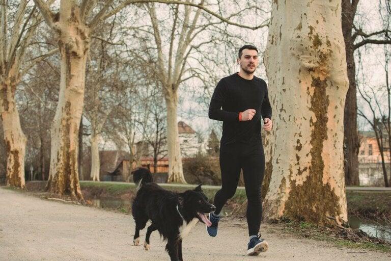 Samen met je hond hardlopen: vijf tips