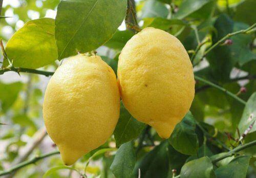 Cytryny pozwolą Ci na trening pomimo alergii