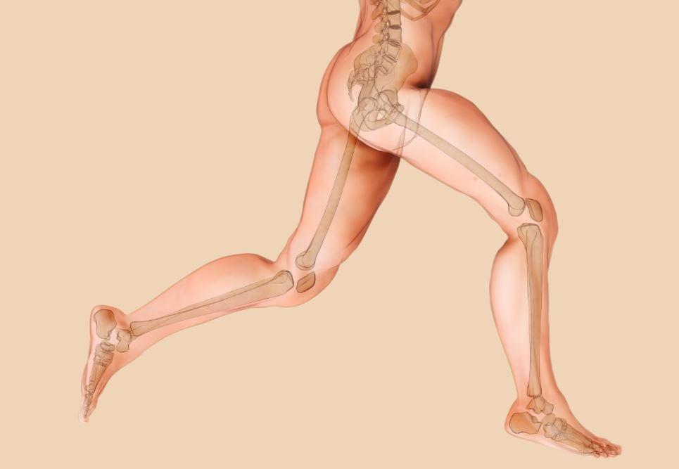 Imagem de corpo humano com os ossos destacados