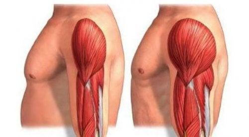 Imagem dos músculos do braço antes e depois de treino para hipertrofia muscular