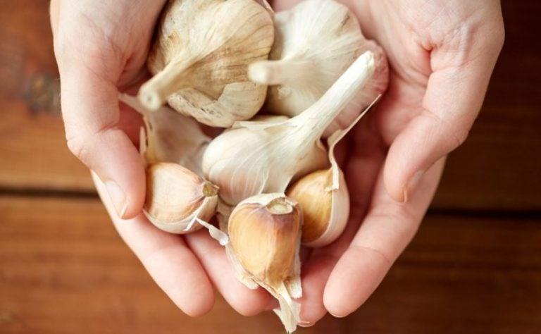 Cabeça e dentes de alho, ajuda a perder peso