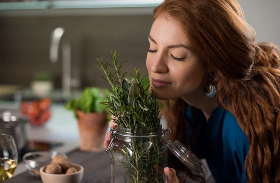 7 benefícios do alecrim para a saúde