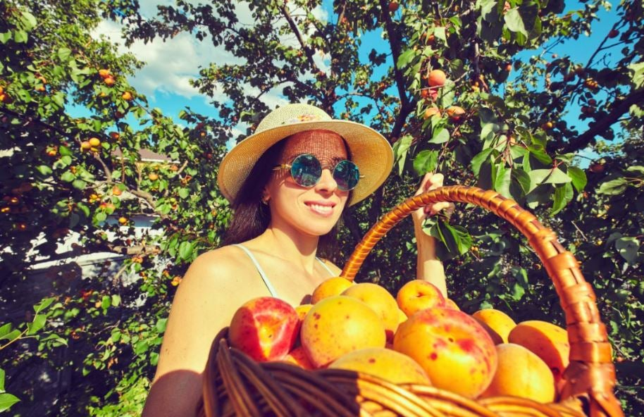 Mulher com cesta de pêssegos
