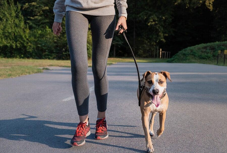 Escolha o melhor lugar para correr com o seu cachorro