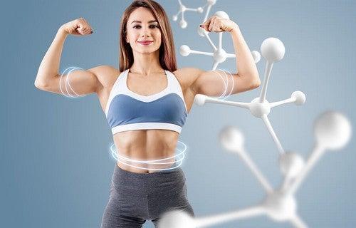 Saiba qual é a importância dos processos de anabolismo e catabolismo