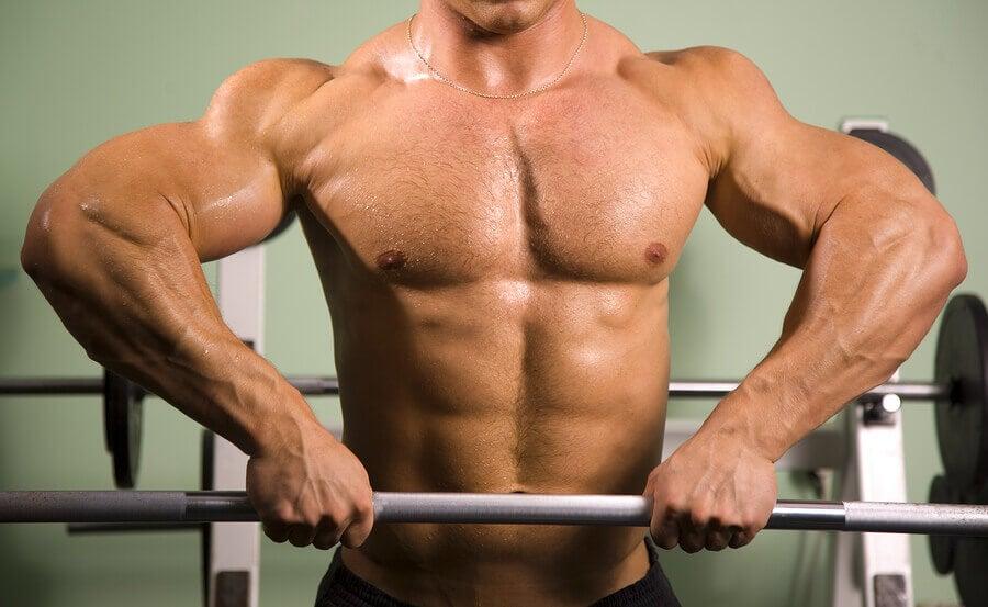 Quais os músculos do tórax e do abdômen?