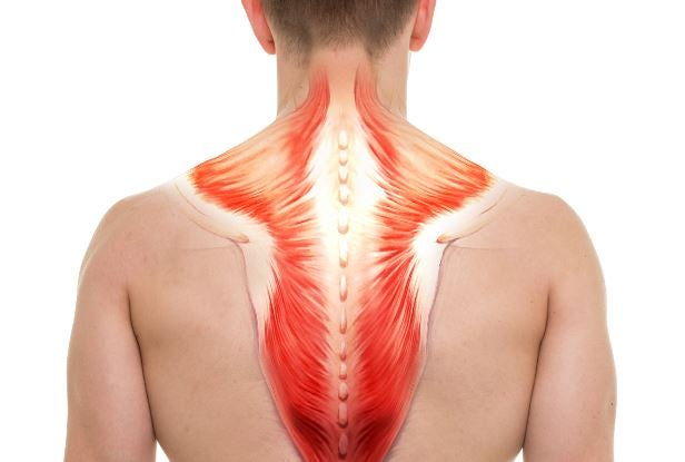 Anatomik sırt kasları