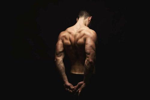 Trapez Kasları: Anatomileri ve Güçlendirici Egzersizler
