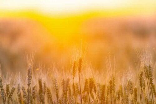 Doğal Beta-Glukan Kaynakları
