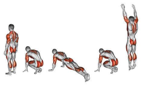 burpee hareketinde çalışan kaslar