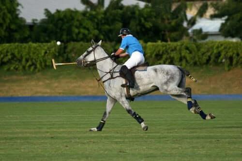 Polo Sporu Hakkında Bilmeniz Gereken Her Şey