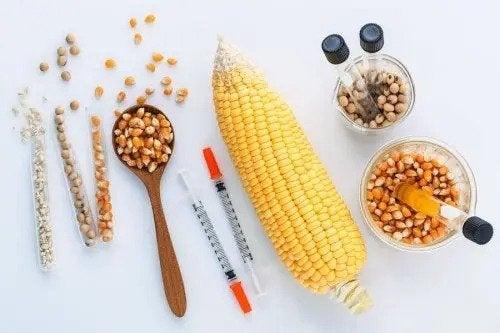 Genetiği Değiştirilmiş Gıdalar Güvenli Midir?