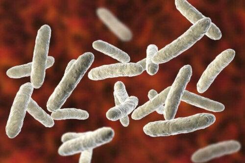 Sindirim sistemi mikrobiyotasında bulunan bazı sağlıklı bakteriler.